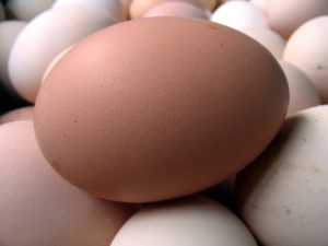 Eggs are a high quality source of protein