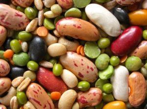 Legumes work against the Paleo Diet