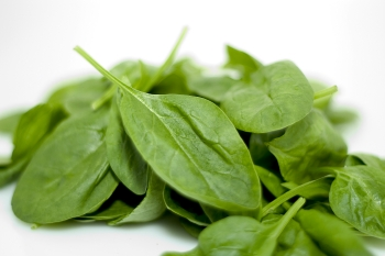 Spinach is an excellent food source for increasing your health
