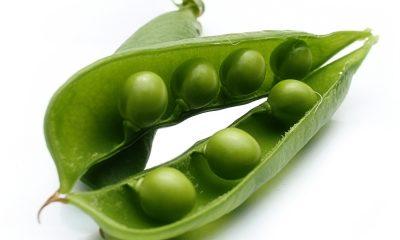vegetables_20