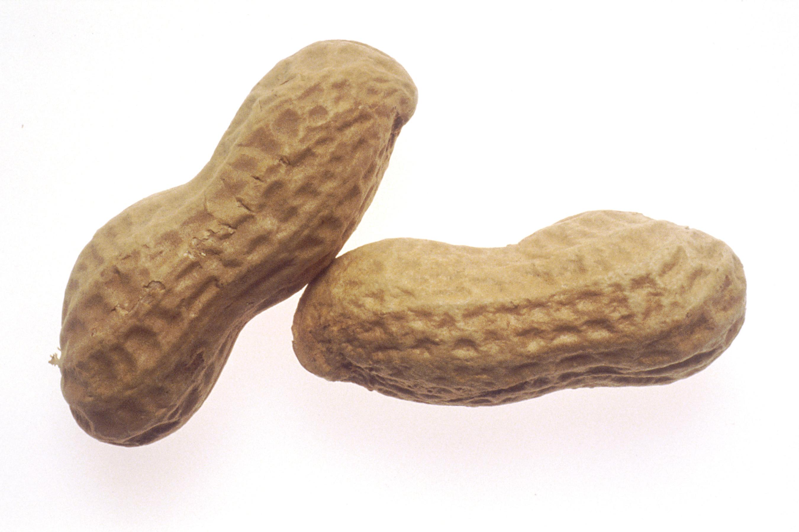 Fat Content In Peanuts 31