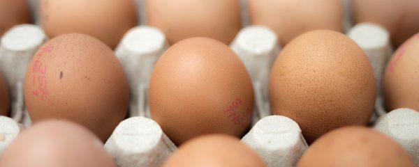 Row of healthy free range eggs