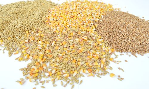 paleo_foods_avoid_04_grains